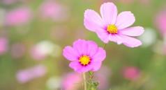 fioricampi